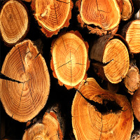 Les bois utilisés2